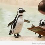 Pinguino brinca sobre un lobo marino