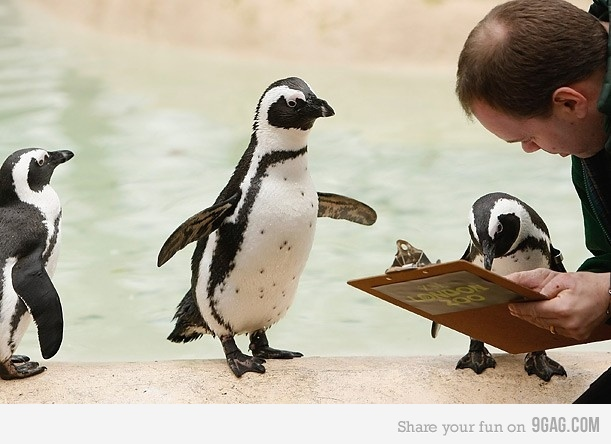 imagenes-graciosas-pinguino