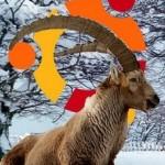 Guia Instalación Intrepid Ibex